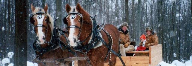 Sleigh Rides - Grand Rapids - West Michigan